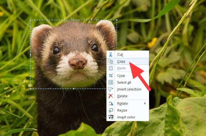 copy 2 - How to Put a Transparent Image Over Another Image in Paint 13